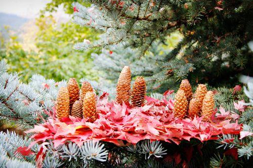 Pine cone family small